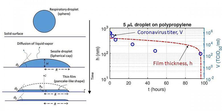 Skema film tipis cair yang mengering pada permukaan dan perbandingan ketebalan lapisan tipis yang bervariasi waktu dengan titer virus corona (konsentrasi virus terendah yang masih menginfeksi sel) pada plastik.