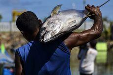 Dari Jepang ke AS, Ikan Tuna Indonesia Kini Menguasai Dunia