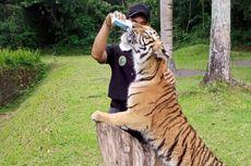 Harga Tiket Taman Safari Prigen Terbaru 2021, Ada Diskon