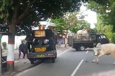 Berlari Liar dan Masuk Warung, Sapi Kurban Mati Ditembak Polisi
