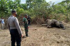Gajah Jantan Ditemukan Mati di Kebun Sawit, Diduga Keracunan