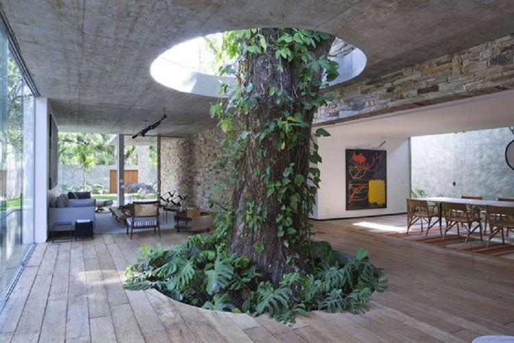 Pohon sebagai elemen alami interior yang menjadi focal point pada Beautiful Brazilian House