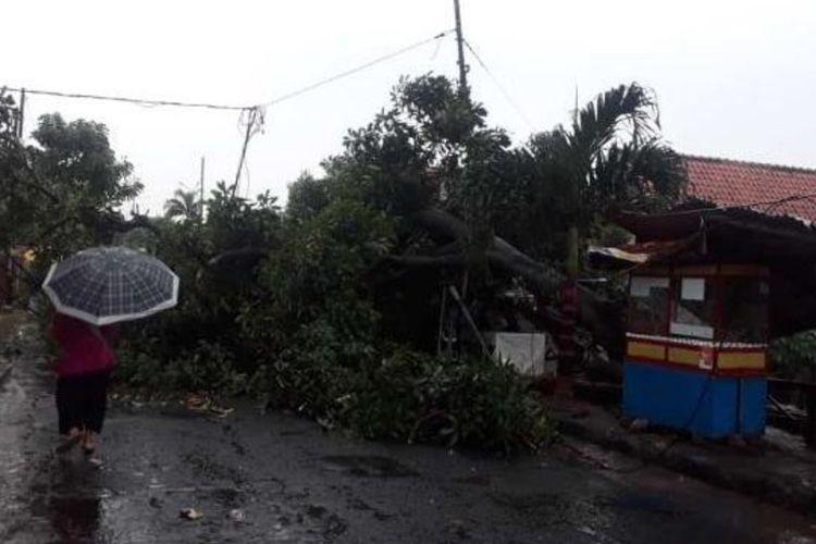 Hujan deras disertai angin kencang yang melanda Kota Bogor sejak sore hingga jelang malam menyebabkan pohon tumbang, Sabtu (26/10/2019)