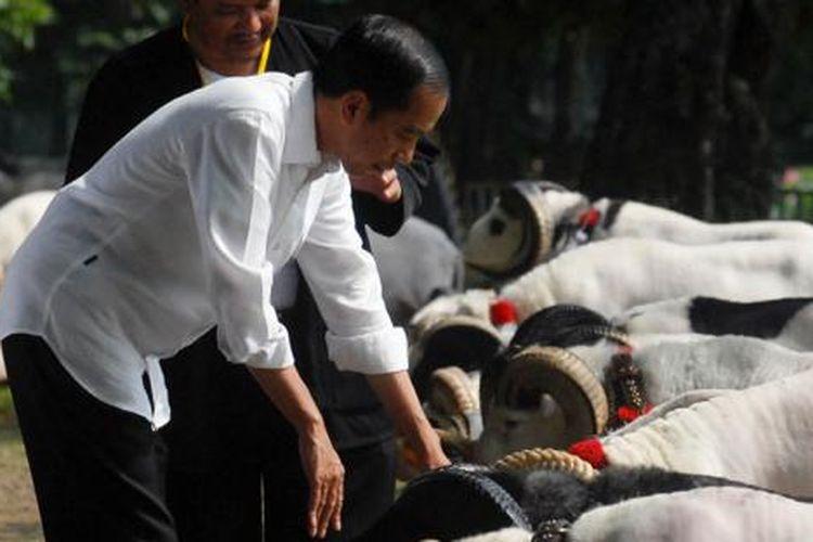Presiden Joko Widodo saat melihat domba garut milik peternak yang ikut dalam Kontes Domba Garut dan Kambing Piala Kemerdekaan, di Kebun Raya Bogor, Sabtu (27/8/2016).