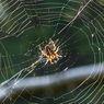 Banyak Jaring Laba-laba di Rumah? Basmi dengan 5 Bahan Alami Ini