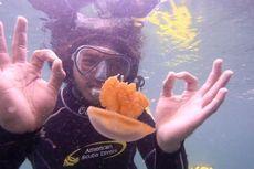 Berenang Aman dengan Ubur-ubur, Ini 4 Tempat Pilihan di Indonesia