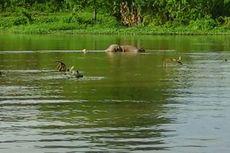 Mayat Pria Tanpa Busana Mengapung di Sungai