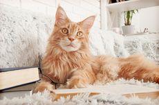 10 Pilihan Jenis Kucing Lucu untuk Dipelihara