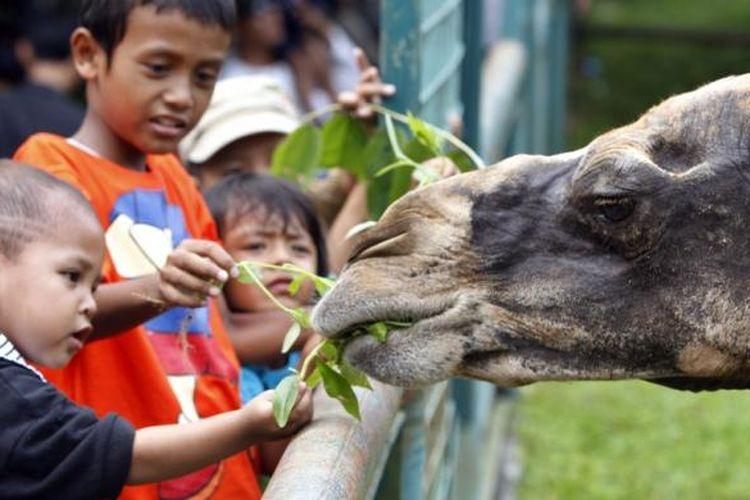 ILUSTRASI - Pengunjung memberi makan unta di Taman Margasatwa Ragunan, Jakarta Selatan, Minggu (12/9/2010). Pada libur Lebaran ini, banyak warga Ibu Kota mendatangi lokasi wisata maupun tempat hiburan lainnya.