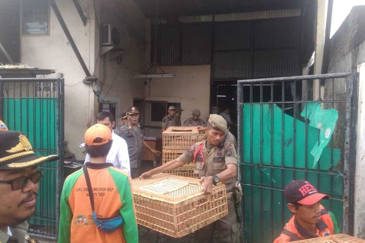 Satpol PP Jakarta Timur saat proses relokasi tempat pemotongan hewan unggas di kawasan permukiman warga Kecamatan Matraman dan Pulogadung, Kamis (30/1/2020).