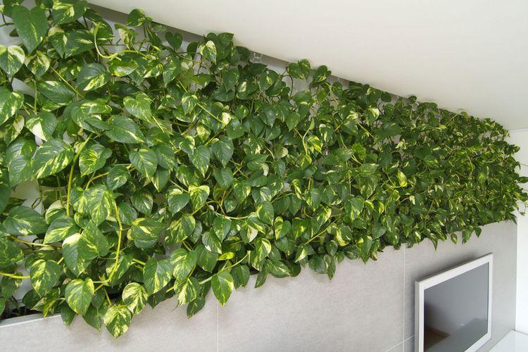 Penataan tanaman interior oleh Rules Architects