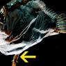 Susah Cari Pasangan, Anglerfish Rela Bucin Seumur Hidup