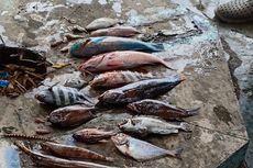Pastikan Penyebab Kematian Ikan, Sampel Air Laut di Malut Dikirim ke Manado