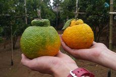 Yuk, Belanja Buah Langka dan Durian Medan di Fruit & Veggie Festival