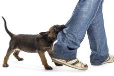 12 Hal yang Perlu Diketahui Pemilik Anjing