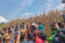 Kunjungi Desa Agrowisata di Pekanbaru, Wamentan Ikut Panen Jagung