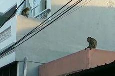 2 Ekor Monyet Berkeliaran di Perumahan di Cilodong Depok dan Resahkan Warga