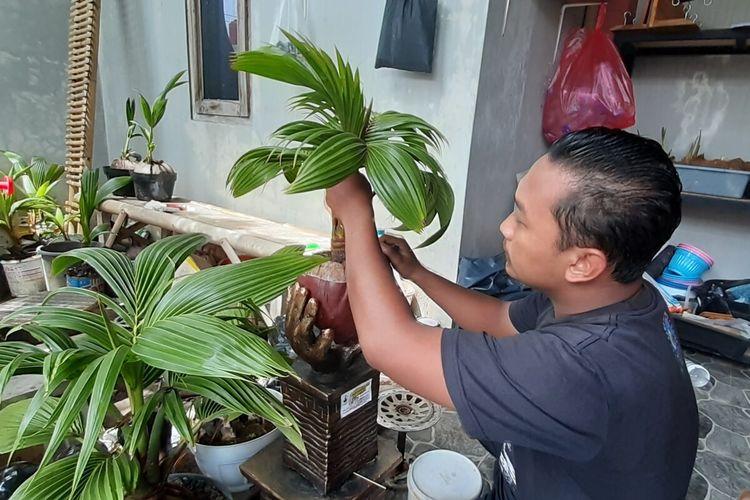 Dimas Hafid Karyono (28), warga Kadipiro RT 001, RW 010, Kelurahan Bejen, Kecamatan/Kabupaten Karanganyar, Jawa Tengah merawat tanaman bonsai kelapa di rumahnya, Selasa (24/11/2020).