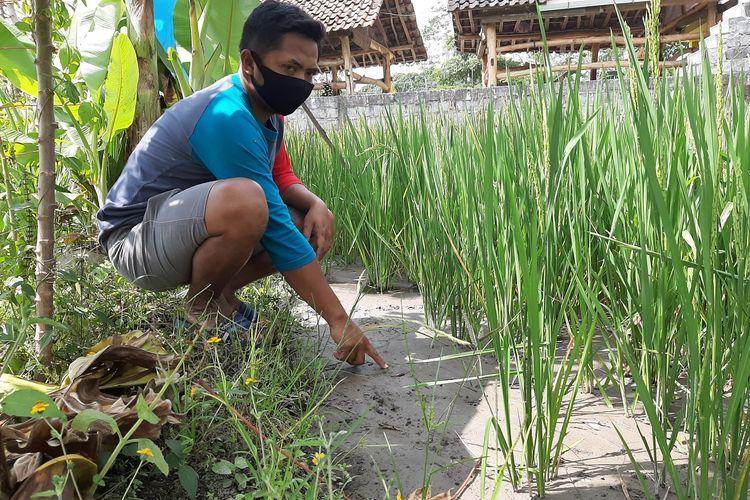 petani muda Desa Hargobinangun, Kecamatan Pakem, Nur Ahmad Wasnan (32) saat menunjukan area sawah yang terdampak aliran abu vulkanik yang masuk ke irigasi. Diduga, aliran abu vulkanik yang masuk ke irigasi ini akibat dari pertambangan.