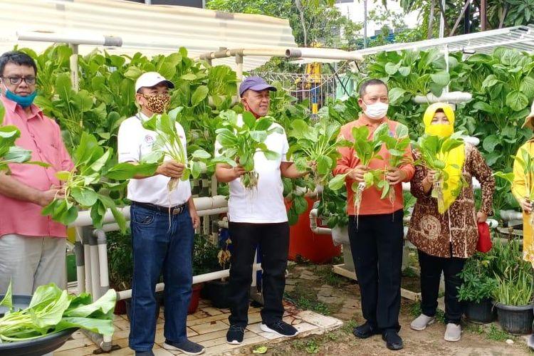 Kelompok Tani Wanita RW 05 Sunter Jaya saat memanen sawi hidroponik sebanyak 40 kilogram