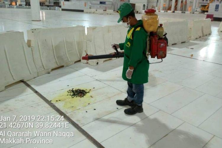 Petugas terlihat membersihkan serangan jangkrik di sekitar Masjidil Haram, Mekkah