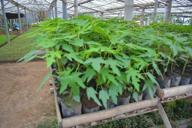 Suasana di tempat persemaian bibit tanaman di Dusun Wedani, Desa Badang, Kecamatan Ngoro, Kabupaten Jombang, Jawa Timur. Wilayah itu dikenal sebagai Kampung Bibit karena mayoritas warganya bergelut pada usaha penyemaian dan penjualan bibit tanaman, terutama komoditas sayur.
