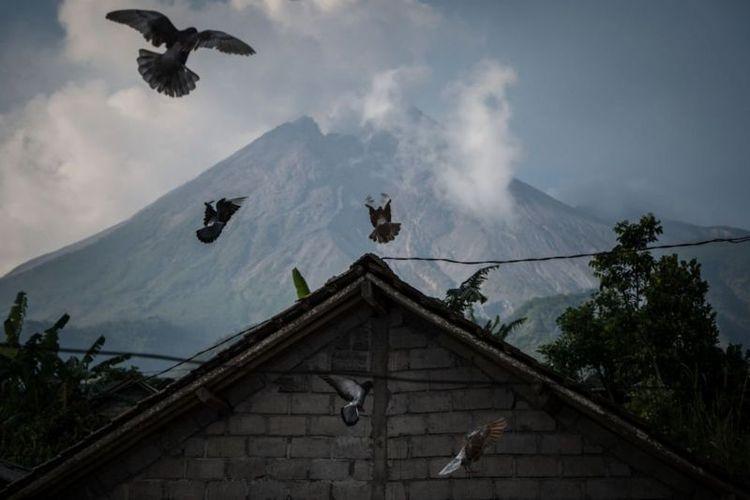 Gunung Merapi terus menunjukkan aktivitas vulkanik. Erupsi eksplosif diprediksi BPPTKG bisa terjadi, meski waktunya tak dapat ditentukan.