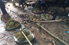 Ini Jadwal Panen Durian di Indonesia