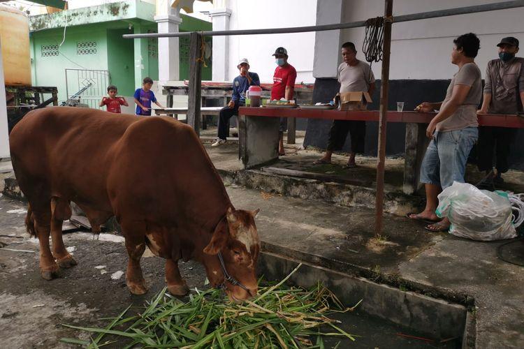 Sapi kurban peranakan limosin dan simental sumbangan Presiden Jokowi untuk Nunukan Kaltara, ditempatkan di halaman masjid Agung, jadi tontonan warga dan rencananya dibagikan untuk 680 dhuafa dan fakir miskin