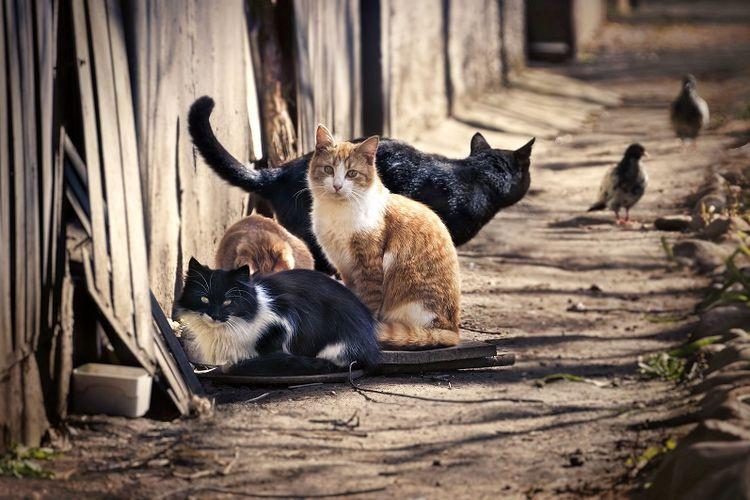 7800 Gambar Kumpulan Hewan Kucing HD Terbaik
