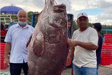 Nelayan Ini Tangkap Ikan Kerapu Raksasa, Harganya Diperkirakan Rp 42,2 Juta