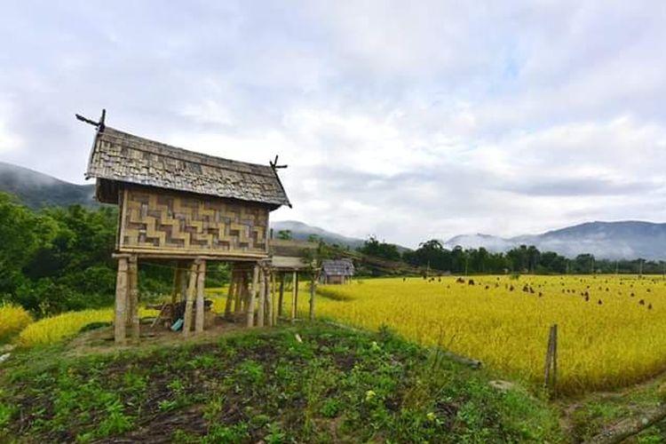 Kabupaten Luwu Utara.
