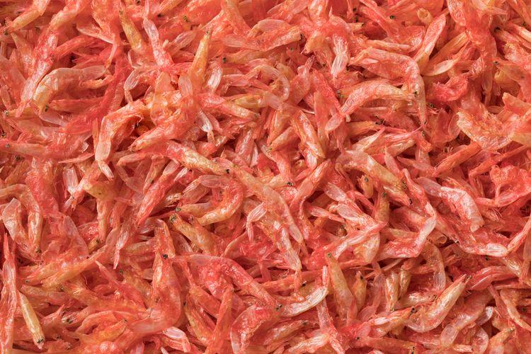 Ilustrasi udang ebi Jepang, warnanya merah muda.