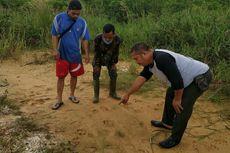 Jejak Harimau Sumatera Ditemukan di Dekat Permukiman Warga di Riau