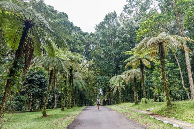Kebun Raya Bali.