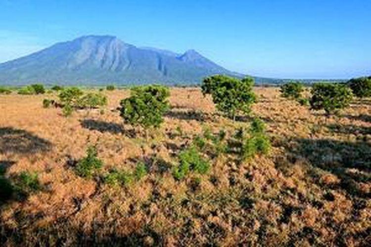 Taman Nasional Baluran di Jawa Timur.