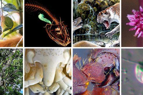 Orangutan Tapanuli Masuk 10 Besar Spesies Baru Tahun Ini
