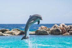 Serba-serbi Hewan: 5 Cara Lumba-lumba Berkomunikasi