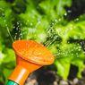 Kapan Waktu Terbaik Menyiram Tanaman Sayuran?