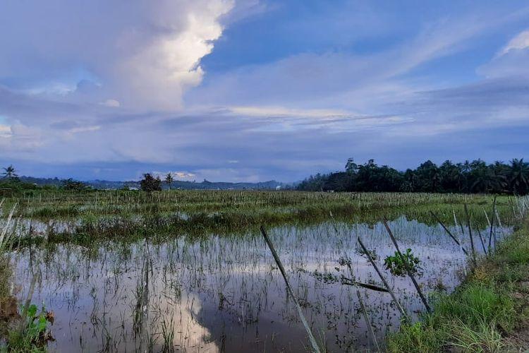 Sawah di Desa Bukit Raya, Kecamatan Tenggarong Seberang, Kutai Kertanegara, Kalimantan Timur, yang terendam banjir pada Rabu (2/12/2020).