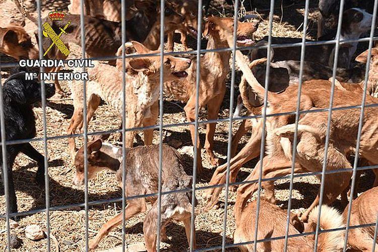 Seorang wanita yang tinggal di peternakan bersama pasangannya telah ditangkap dan dituduh melakukan penyiksaan hewan. Petugas mengatakan tidak jelas mengapa dia memelihara begitu banyak anjing di sana.
