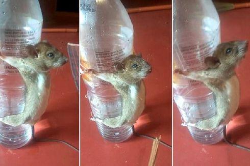 Dituduh Makan Kabel Charger, Tikus Ini Diikat di Botol dan Disiksa