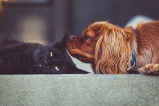 3 Tips Mengenalkan Kucing ke Anjing agar Tidak Bertengkar