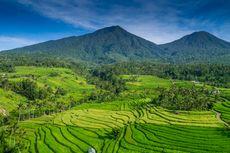 Mengenal Filosofi dan Nilai Budaya Subak yang Jadi Primadona Turis di Bali