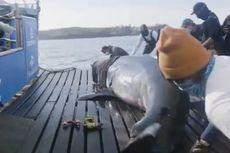 Hiu Putih Raksasa Ditemukan Kanada, Dijuluki