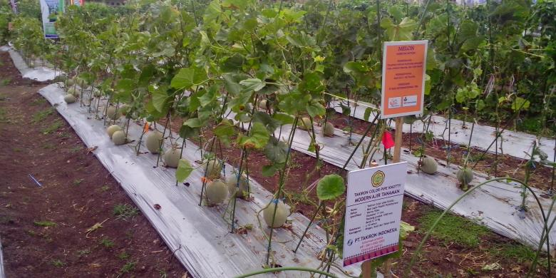 Teknologi Pertanian Harus Dikenalkan Pada Masyarakat Kompascom