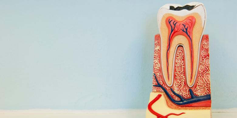 Shutterstock Ilustrasi penyakit gigi dan gusi 2d0e95bc4a