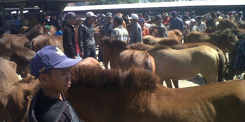 serunya transaksi jual beli kuda di pasar kuda tolo rh regional kompas com