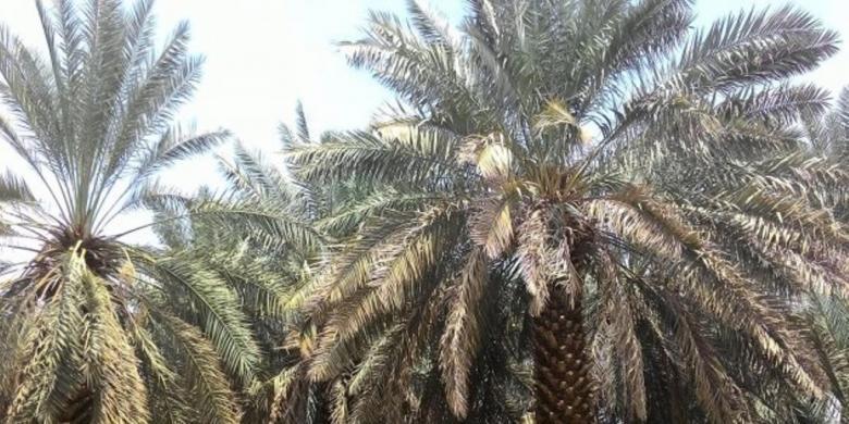 Uswah: Ibrahim bin Adham dan Pemilik Kurma