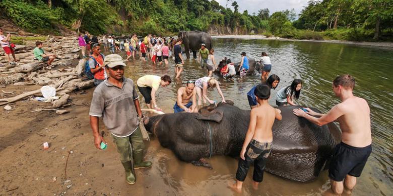 Wisatawan ramai-ramai memandikan gajah-gajah di Tangkahan, Kabupaten Langkat, Sumatera Utara. Tangkahan dikenal sebagai tempatnya gajah-gajah liar dan sungai yang masih terjaga kebersihannya.